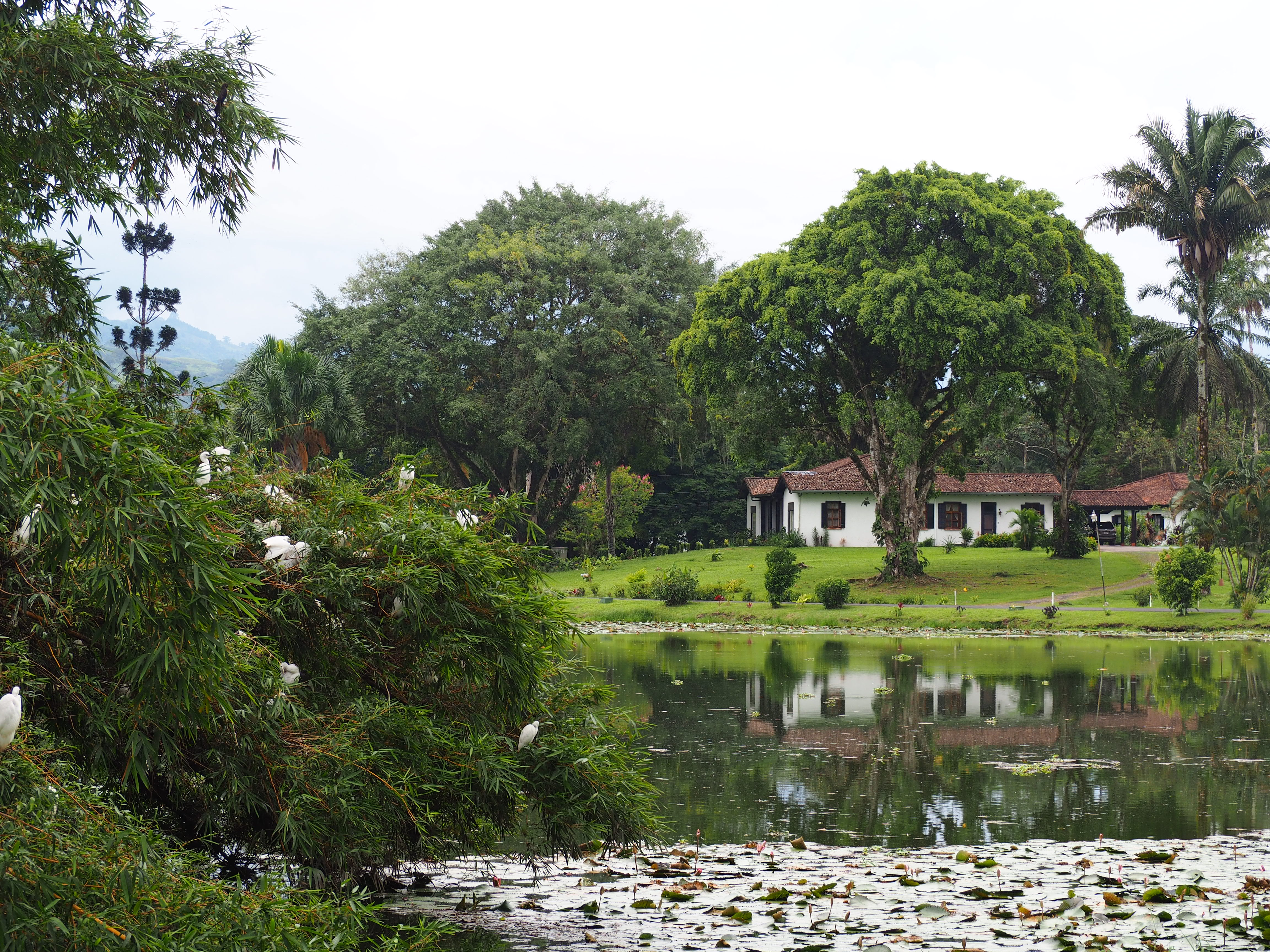 The Botanical Gardens Of Catie In Turrialba The Tiny Travelogue